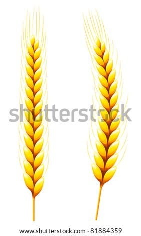 Wheat	Whole Wheat isolated on White. - stock vector