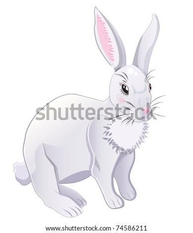 white and grey rabbit isolated on a white background