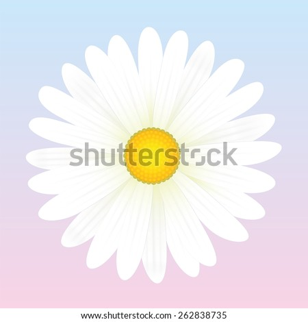 White daisy flower. Isolated vector illustration on light pink to blue background. - stock vector