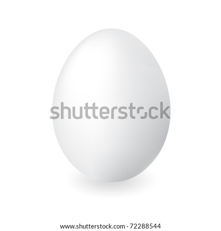 White duck egg shell with isolated white background and shadow