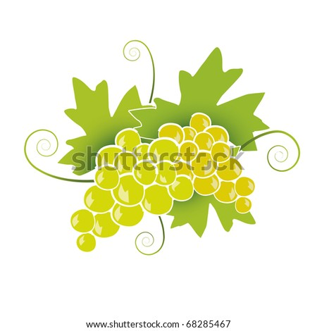 White Grapes - stock vector