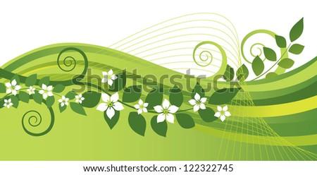 White jasmine flowers and green swirls banner - stock vector