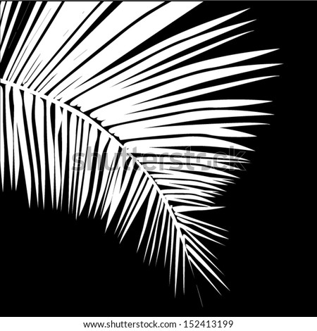 White leaves of a palm tree on a black background - stock vector