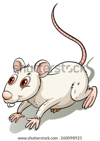 White little rat on a white background