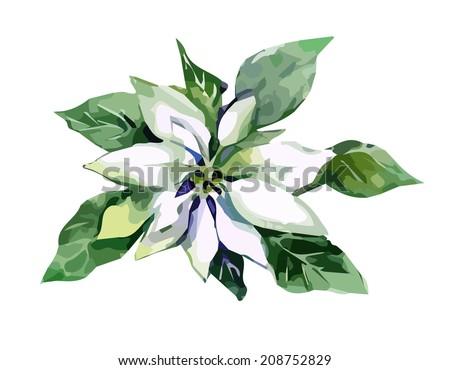 White Poinsettia - stock vector