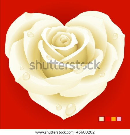 White rose in the shape of heart