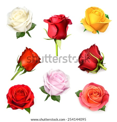 White rose, vector illustration - stock vector