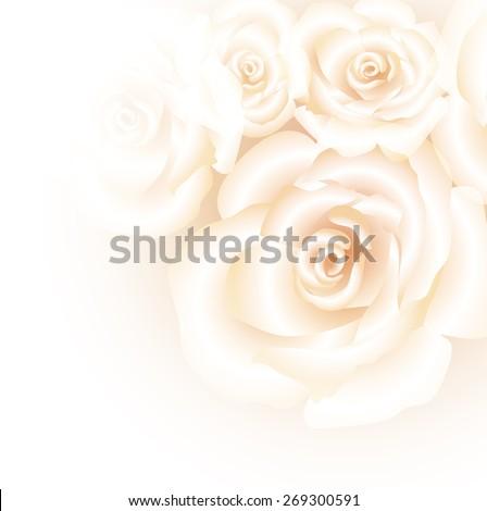 White roses background-Summer season beautiful card - stock vector
