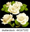 White roses set - stock vector