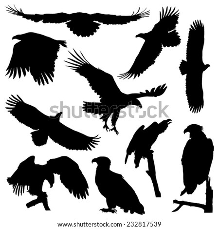 White-tailed eagle in flight silhouettes vector set - stock vector