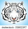 White tiger portrait - high quality vector blue eyed wild cat with pink nose and white fur - stock vector