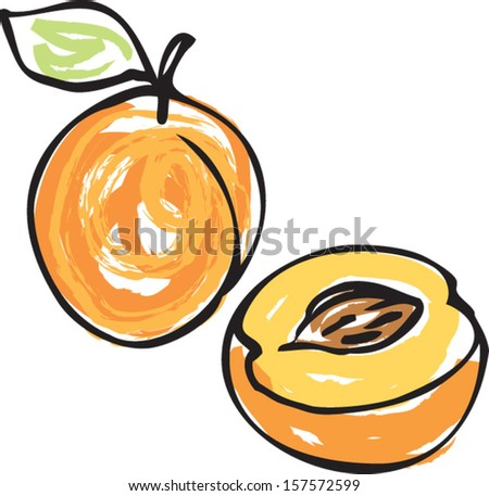 Whole and half apricot - stock vector