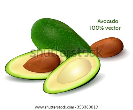 Whole avocado and half of avocado on white background. Vector illustration.