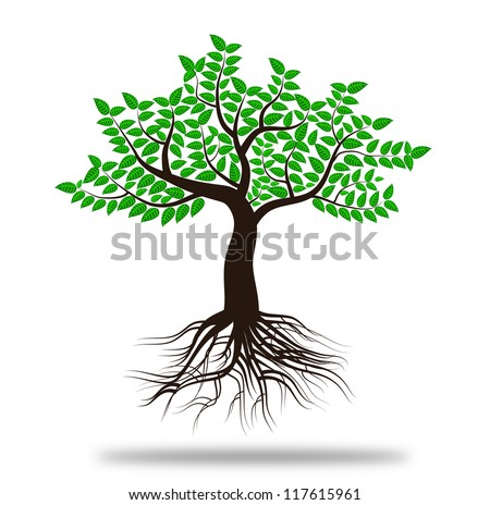 whole green tree with roots isolated white background vector - stock vector