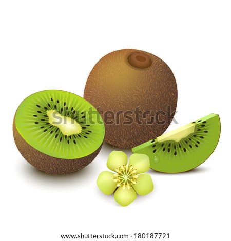 Whole kiwi fruit and his sliced segments with flower isolated on white background. Vector illustration.