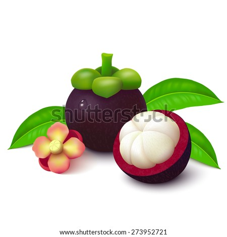 Whole mangosteen, half with slices, flower and leaves isolated on white background. Vector illustration.