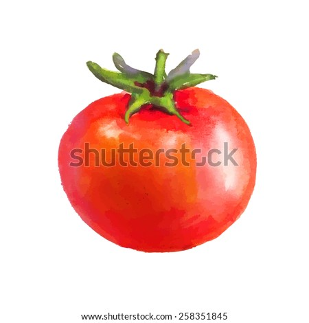 Whole tomato with tail on white background - stock vector