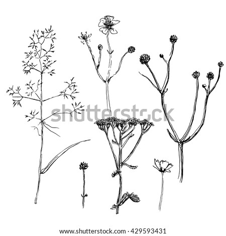 Wild herbs and flowers set. Hand drawn design elements.Vector illustration in black and white.