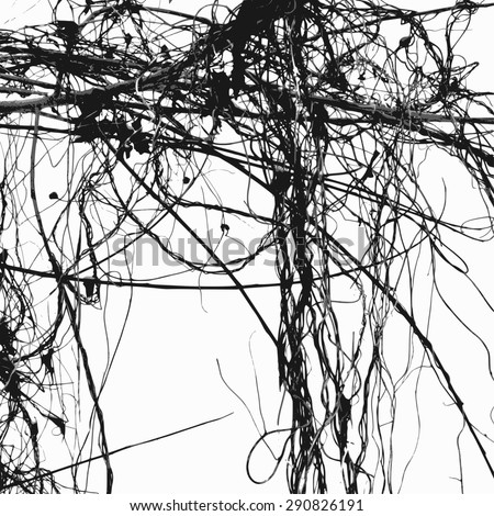 Wild ivy stems and bare branches silhouette, vector - stock vector