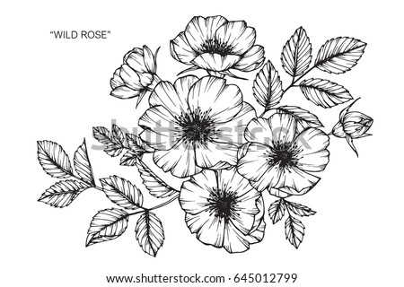 Spring Coloring Pages in addition I1118E07 in addition Garden Fountain moreover 145943 together with Flower sketch. on garden flowers water