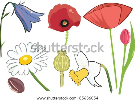 wildflowers - stock vector