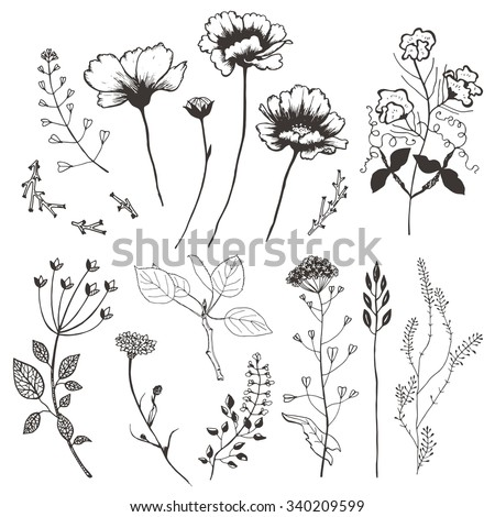 Wildflowers and plants. Hand drawn illustration. - stock vector
