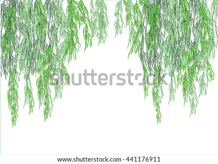 how to grow a willow tree from a branch