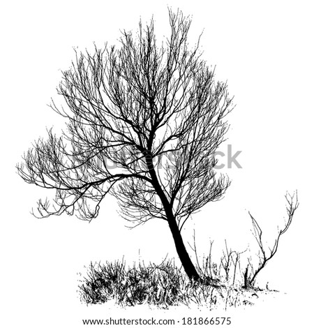 Willow tree with bare branches, full size isolated silhouette, vector - stock vector