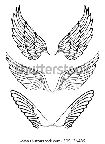 Wings. Elements for design - stock vector