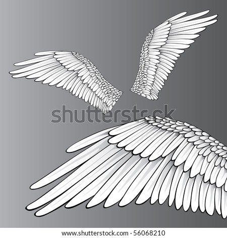 Wings (Realistic Illustration / Design Elements) - stock vector