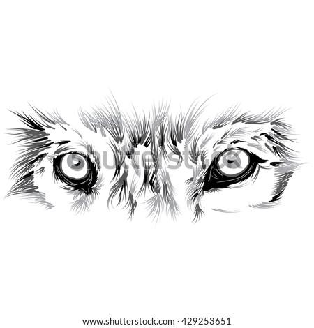 Elementxd 39 s portfolio on shutterstock for Wolf eyes tattoo designs