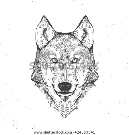 wolf head on white, hand drawn vintage illustration