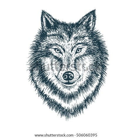 Wolf portrait. Detailed hand drawn style. Isolated on white background