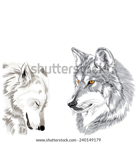 Wolves muzzles sketch
