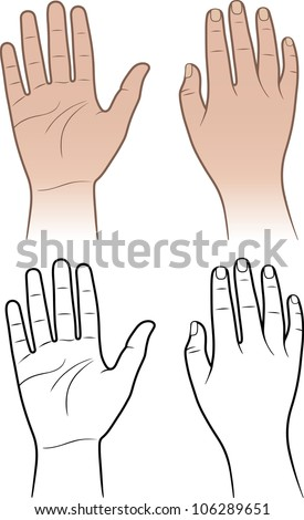 Woman, man hands isolated on white (vector illustration) - stock vector