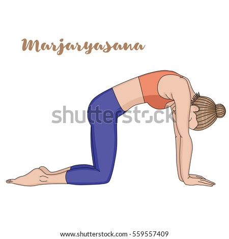 yoga cat stock images royaltyfree images  vectors