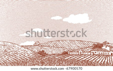Woodcut style illustration of an Italian or Napa Vally style landscape. Note: sky can be removed and clouds can be moved by accessing the hidden layer.