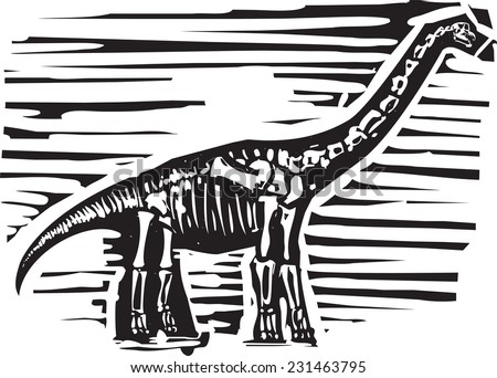 Woodcut style image of a fossil of a long necked Apatosaurus or brontosaurus dinosaur - stock vector