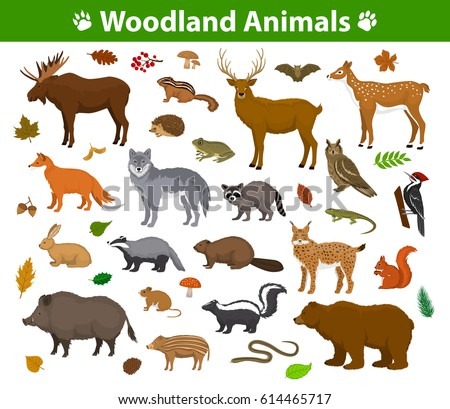 Animal Drawings For Nursery Woodland Forest Animals Birds