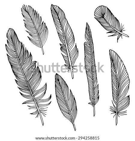 writing feathers - stock vector