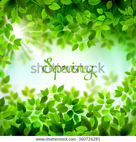 written word Spring. Season branches with fresh green leaves  - stock vector