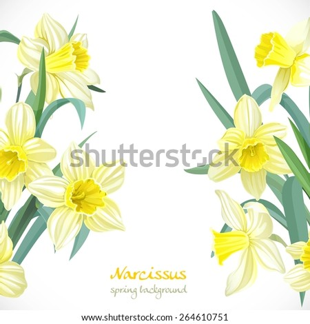 Yellow narcissus spring background - stock vector
