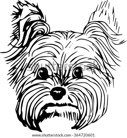 Yorkshire terrier dog hand drawn sketch purebred small dog face on white background