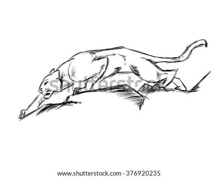 Young Cougar prepares to jump. Sketch. - stock vector