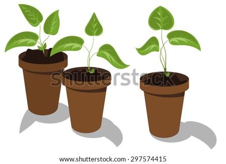 Young flower seedlings in pots - stock vector