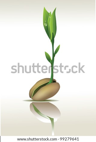 Young seedling with a seed - stock vector