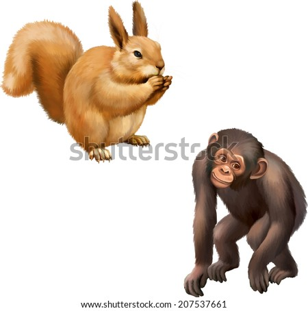 Young squirrel with food in her hands, Baby Monkey Gorilla illustration isolated on white background - stock vector