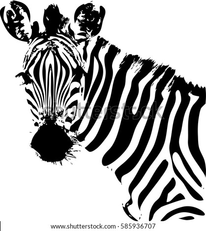 Zebra black and white face sketch vector