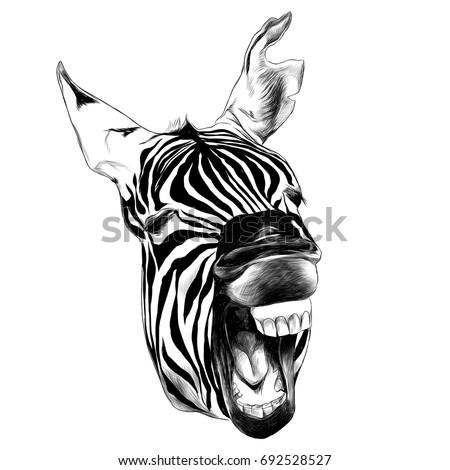 Zebra Head Contorts Face Open Mouth Stock Vector 692528527 ...