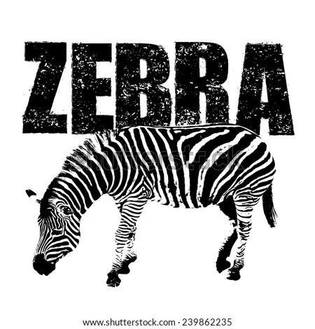 zebra vector, rubber stamp - stock vector